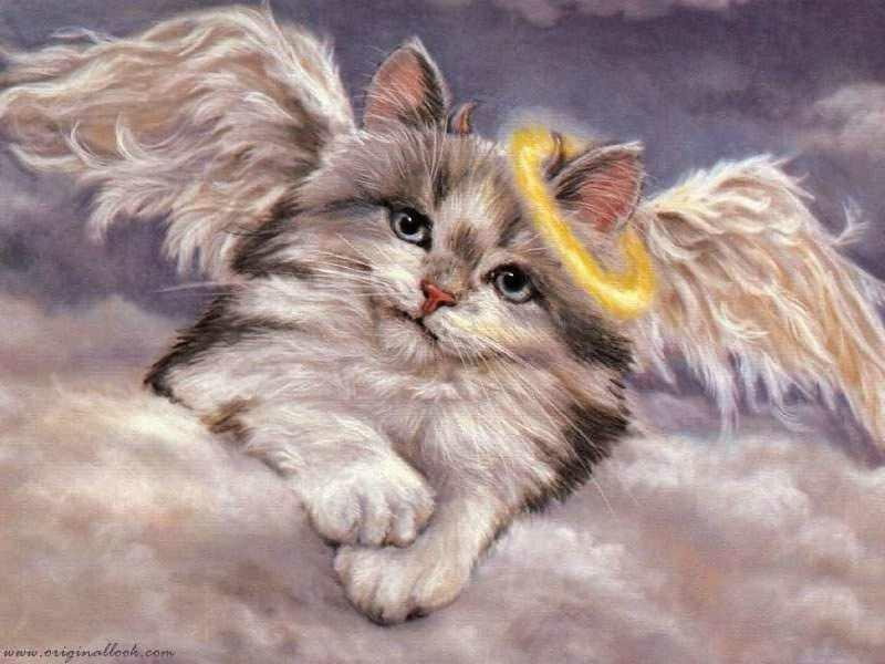 Image result for cat angels